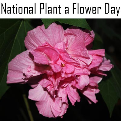 National-Plant-A-Flower-Day