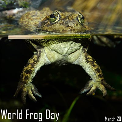 World-Frog-Day